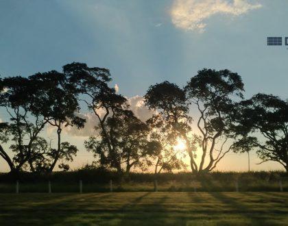 Licenciamento Ambiental e as Atividades Potencialmente Poluidoras